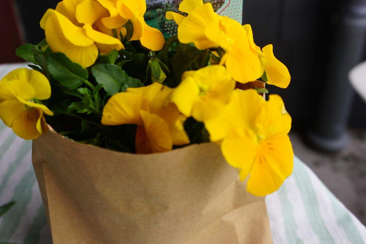 Blumengruss und Flyer Hockweiler